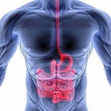 Что скрывает ваш желудок?
